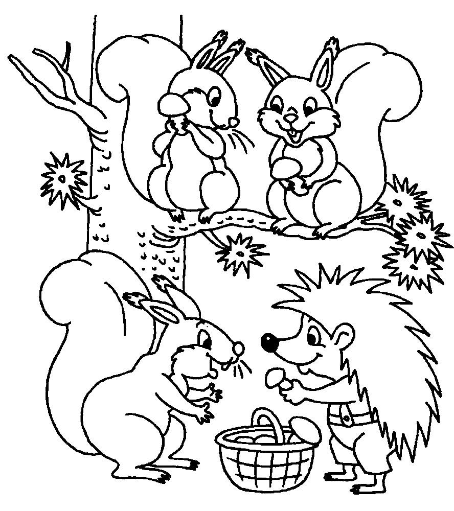 белка раскраски для детей распечатать бесплатно в формате а4