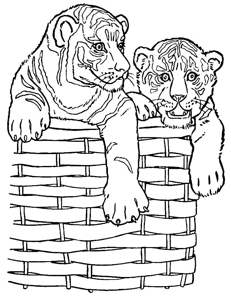 Раскраска тигрята