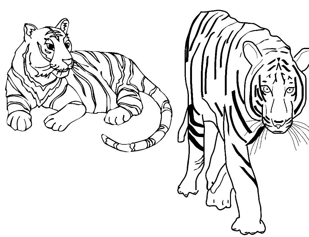 Раскраска тигры