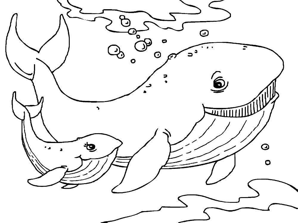 Раскраска киты