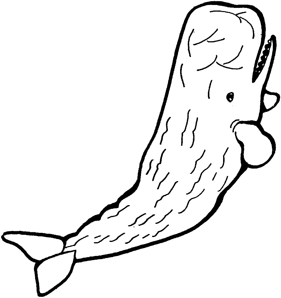 Раскраска кашалот