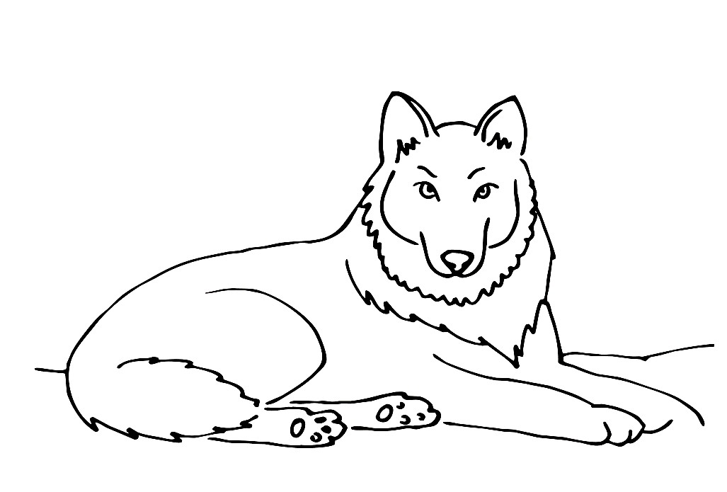 Раскраска красивый волк