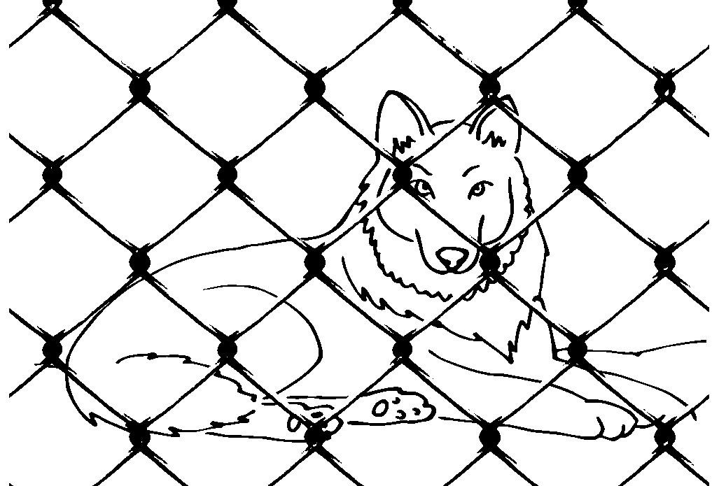 Раскраска волк в клетке