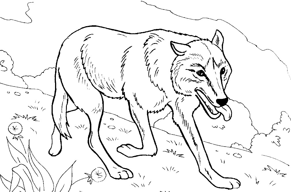 Раскраска волк в лесу