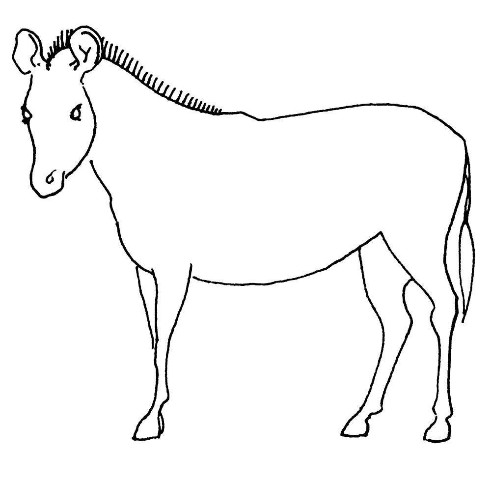 Раскраска зебра для детей без полосок