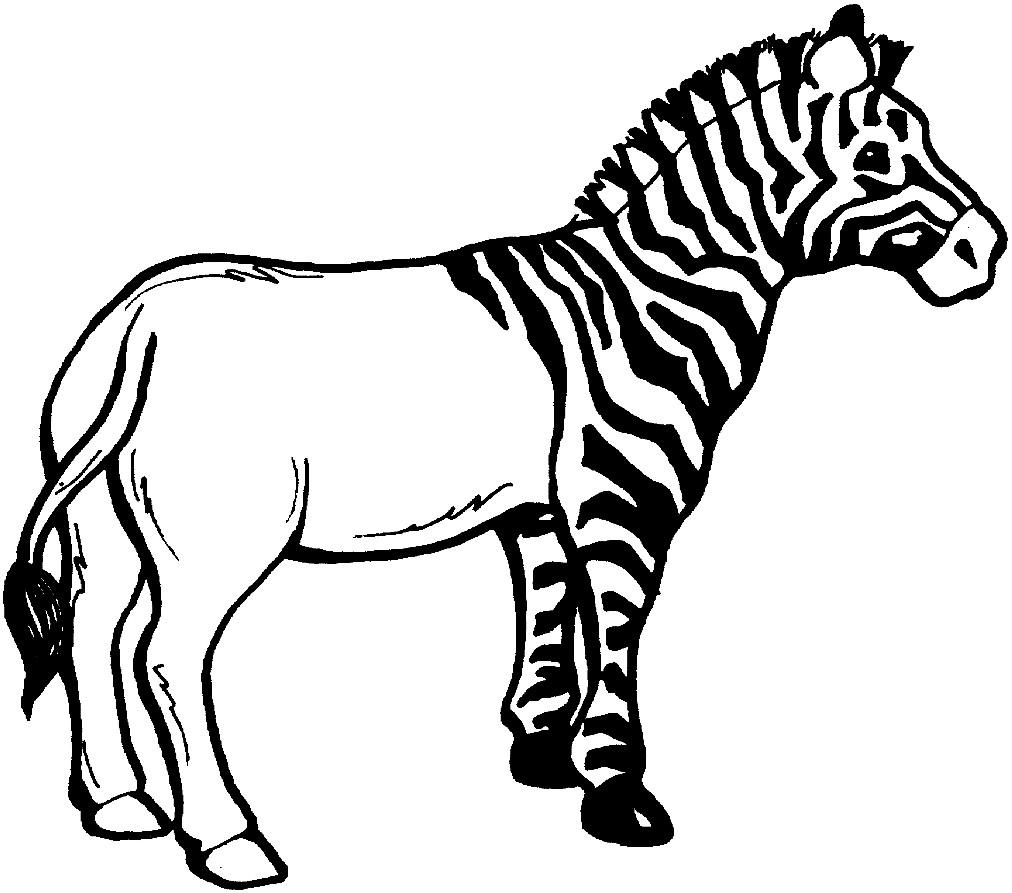 Раскраска зебра без полосок