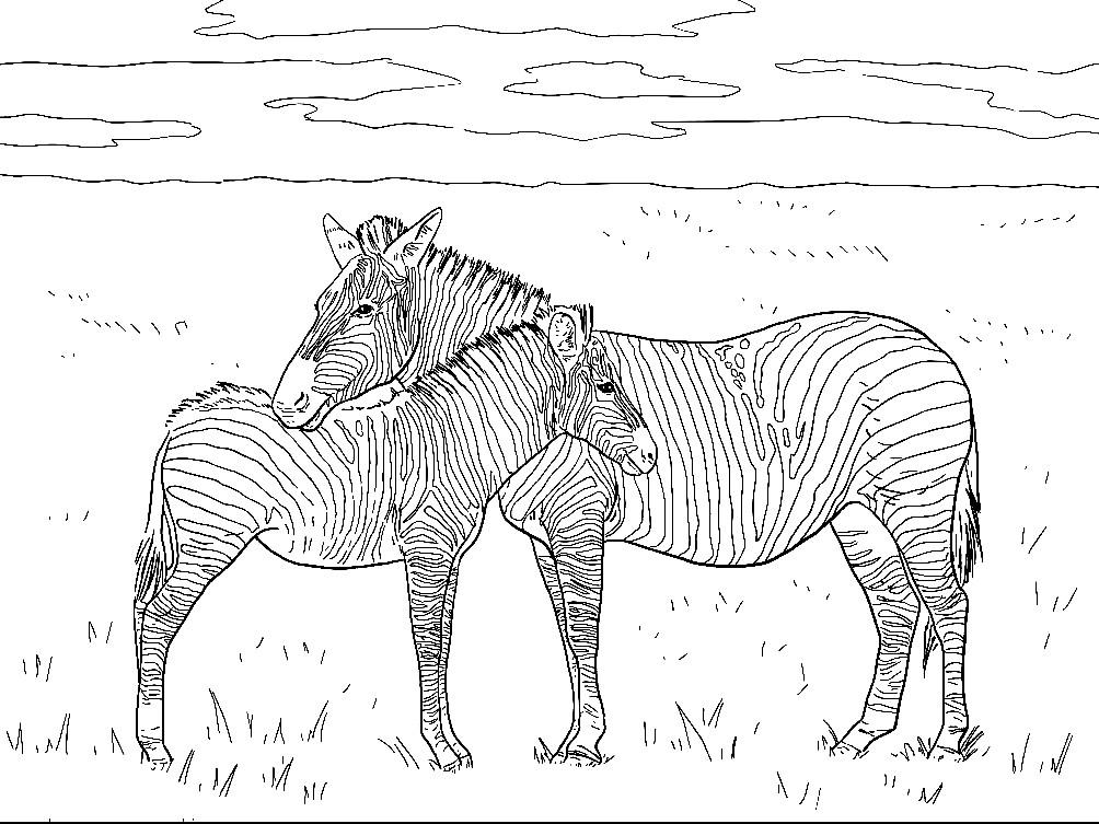 Раскраска зебра с детенышем