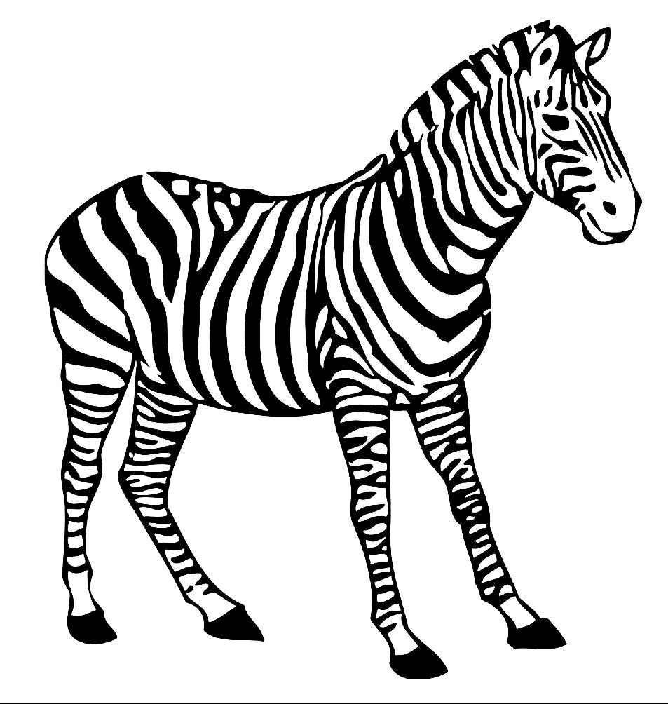 Раскраска красивая зебра