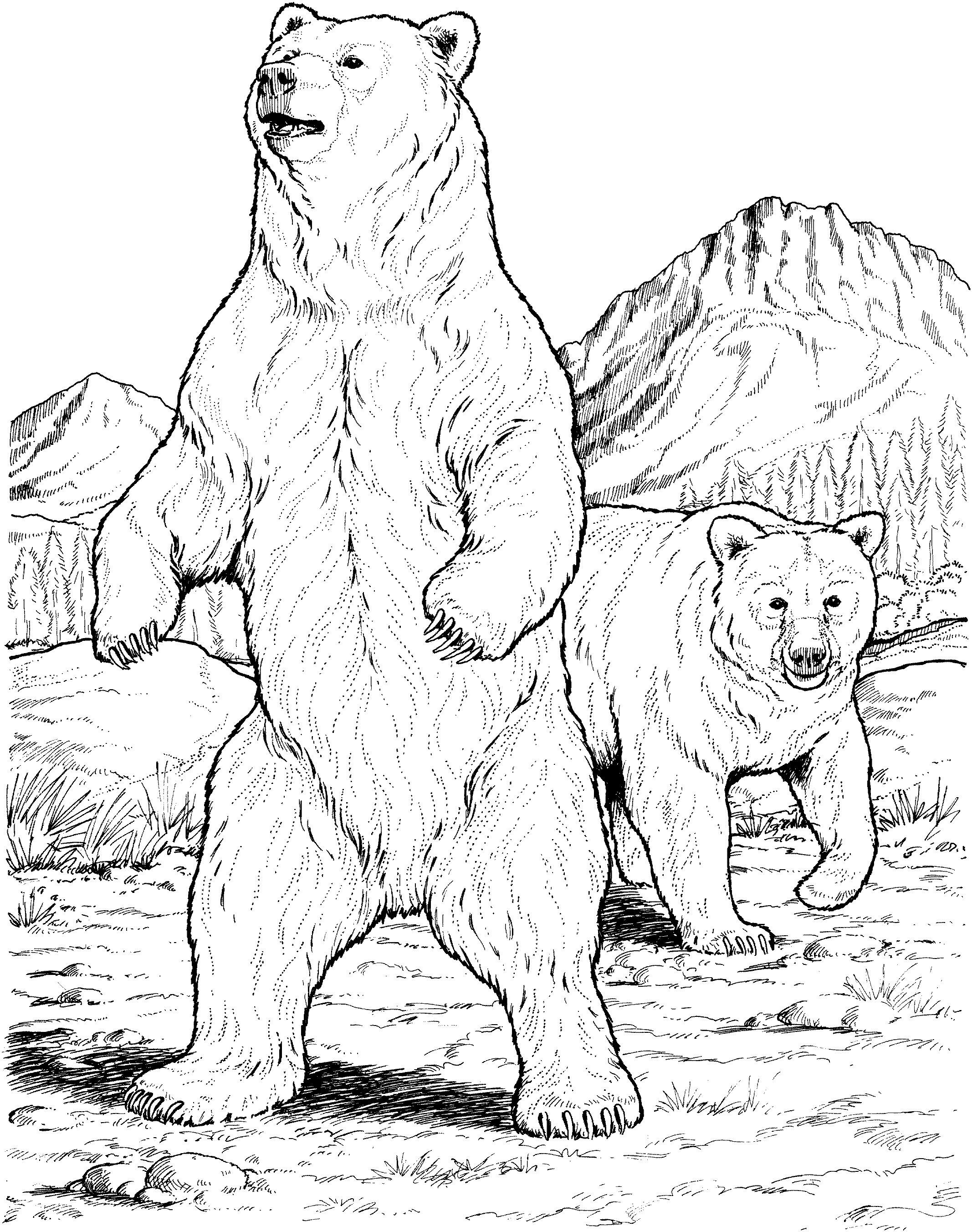 Раскраска Американский черный медведь