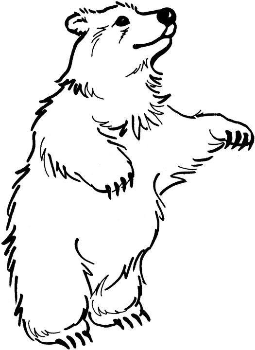 Раскраска бурый медведь