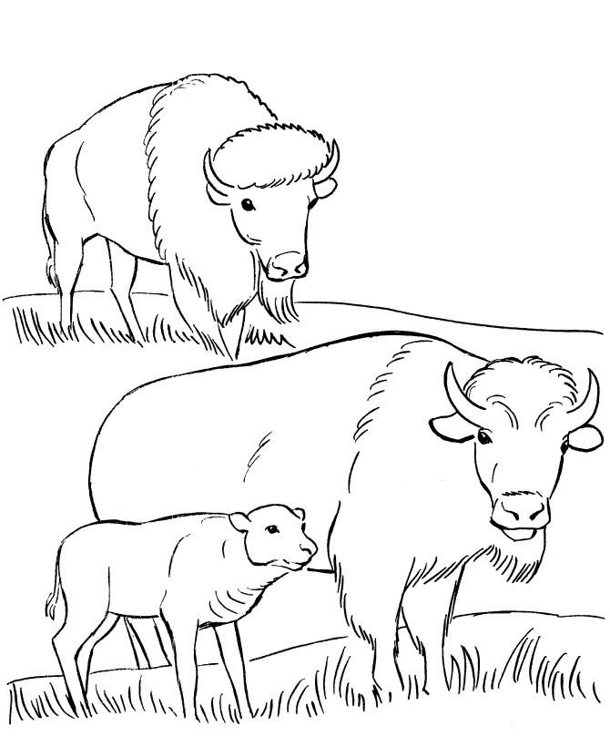 Раскраска семья бизонов