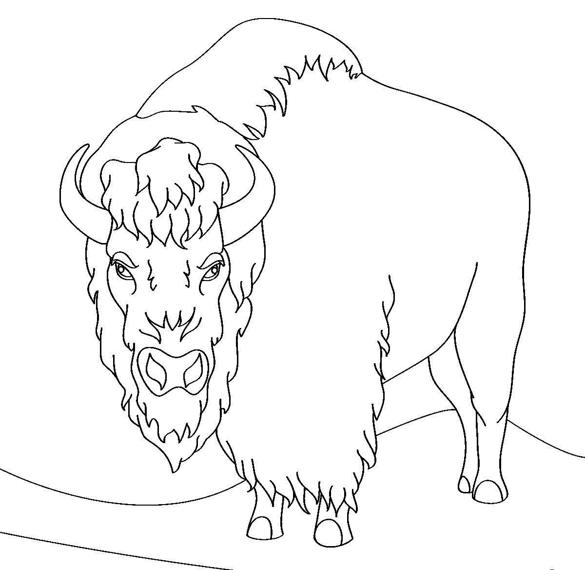 Раскраска сердитый бизон