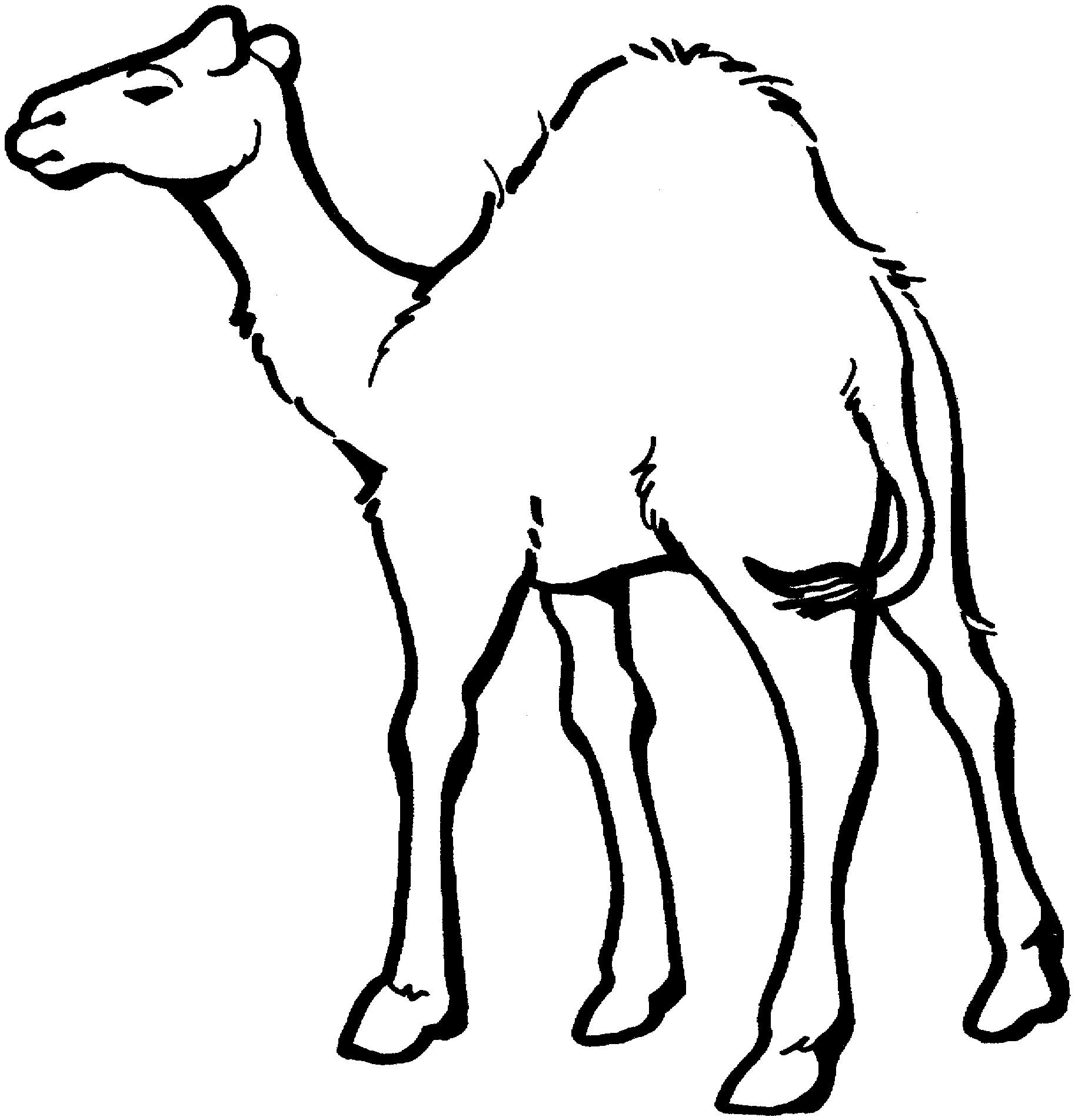 Раскраска грустный верблюд