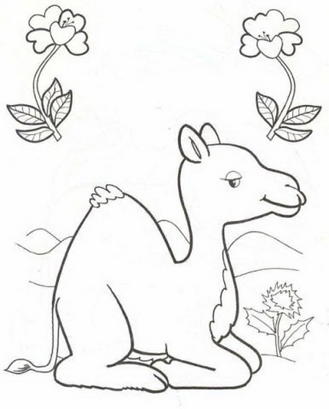 Раскраска верблюжонок