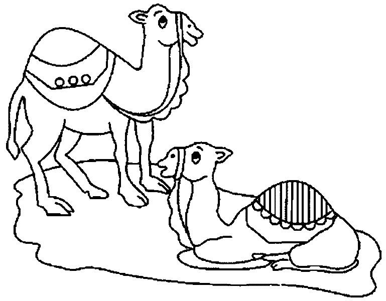 Раскраска два верблюда