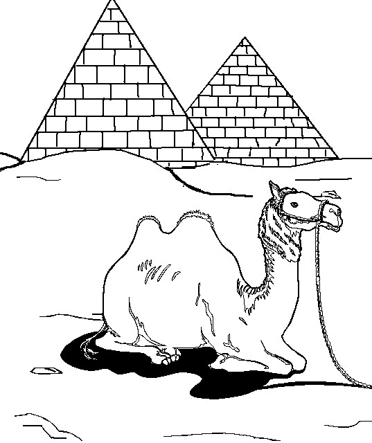 Раскраска верблюд возле пирамид