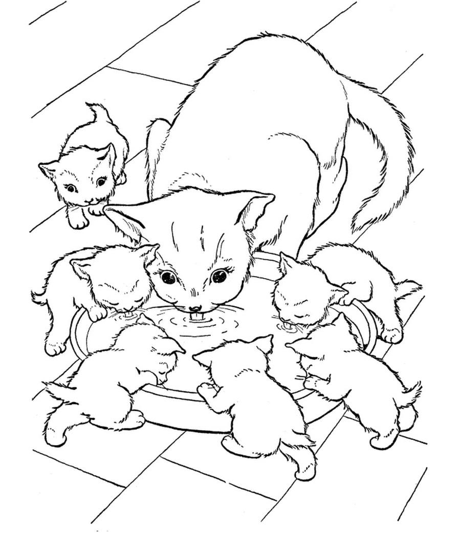 КОШКИ   Раскраски для детей распечатать бесплатно в формате А4