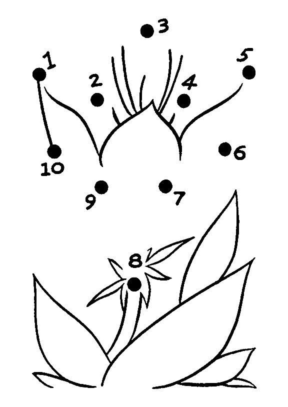 Раскраска цветы по точкам